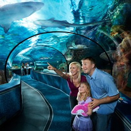 Top Nearby Attractions in Myrtle Beach